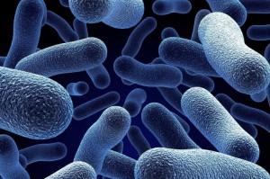 microorganism-bacteria-485x728